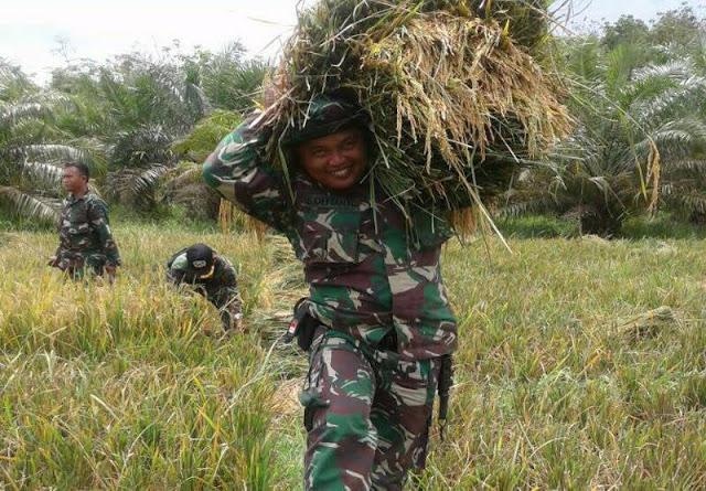 Masa Panen Tiba, Babinsa Turut Serta Bantu Petani di Desa Hulu