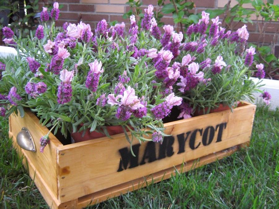 Amueblar con cajas de fruta y plantas tu local