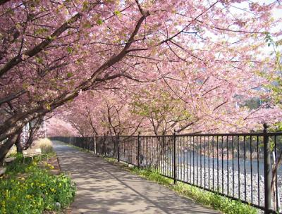 Taman Bunga Sakura, Cibodas