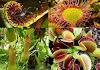 Bitkiler Aleminin Katilleri