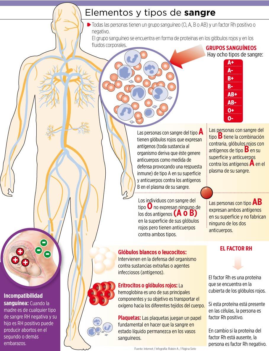 Dieta tipo de sangre b negativo