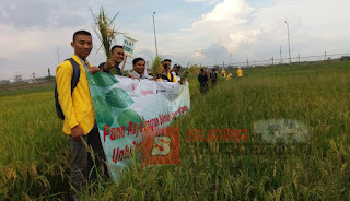 SLP Unigoro Kerjasama EMCL Hasilkan Kualitas Panen Yang Mampu Gerakkan Ekonomi Petani
