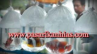 pasar ikan hias terbesar di indonesia