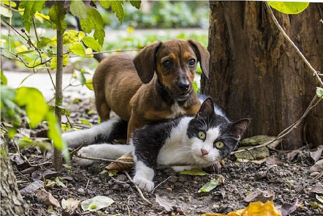 how to know if pet is sick, dog, cat