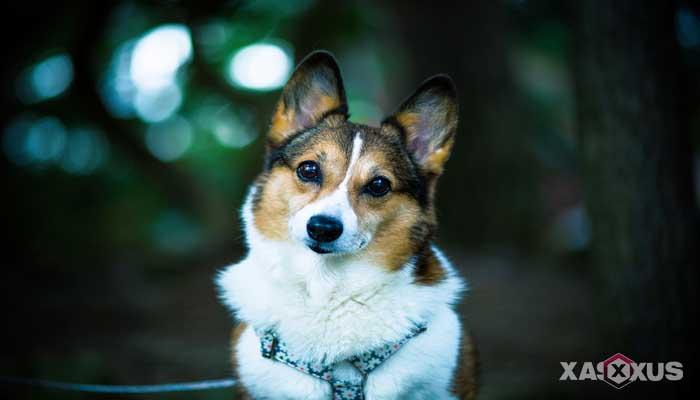 Gambar hewan karnivora atau hewan pemakan daging - Anjing