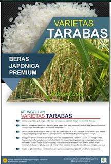 padi japonica