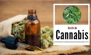 Aceite de Cannabis en listado de aceites esenciales y esencias para Aromaterapia