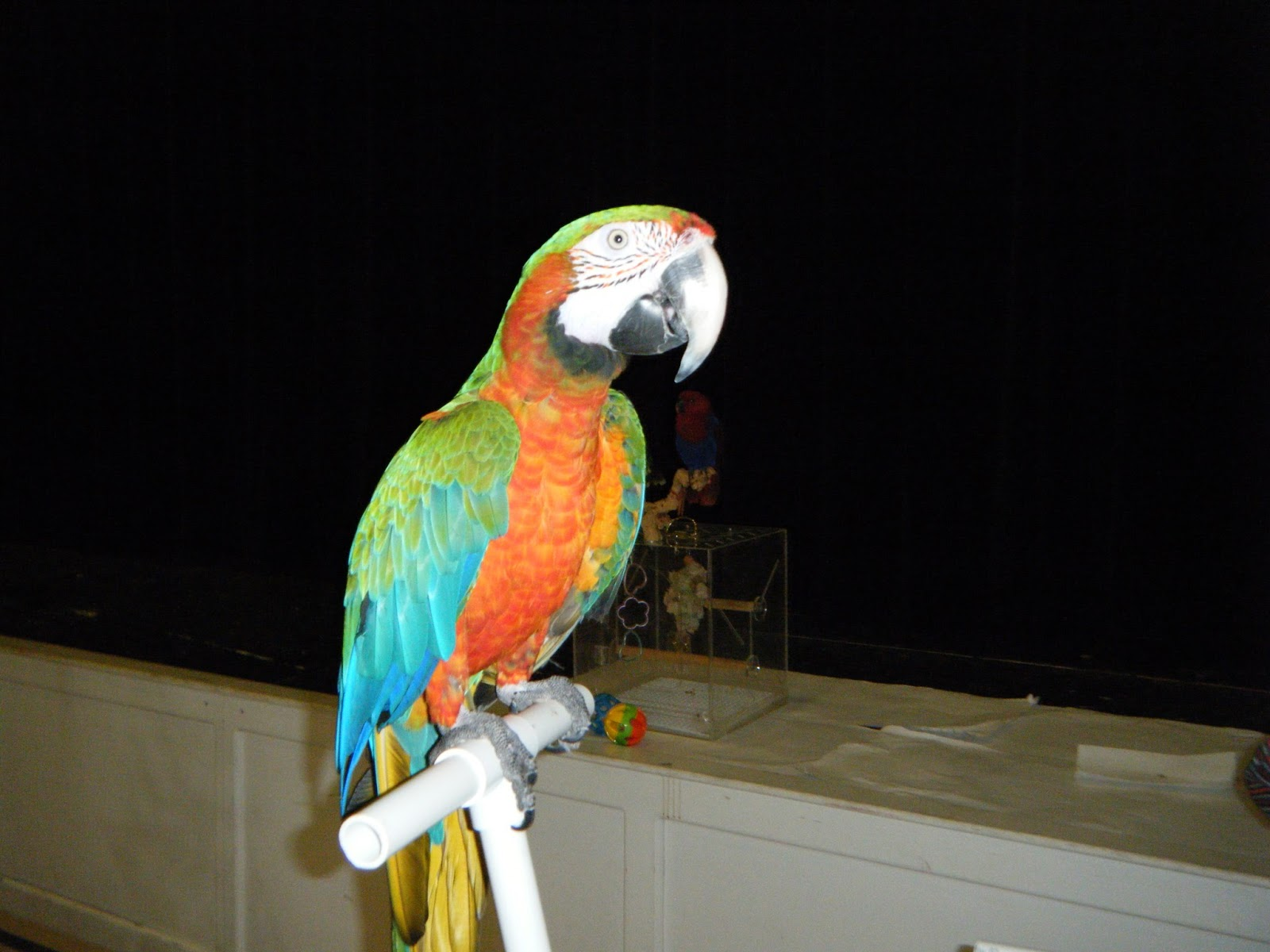 Parrot Pro Shows By Parrot Productions Photos