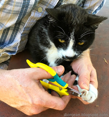 Jasper the cat getting his nails clipped
