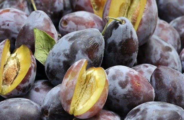 Biar diet sukses, buah plum wajib menjadi santapan setiap hari