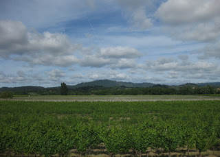 Puffy clouds above rows of grape vines, with a mountain in the distance, Sonoma County, California
