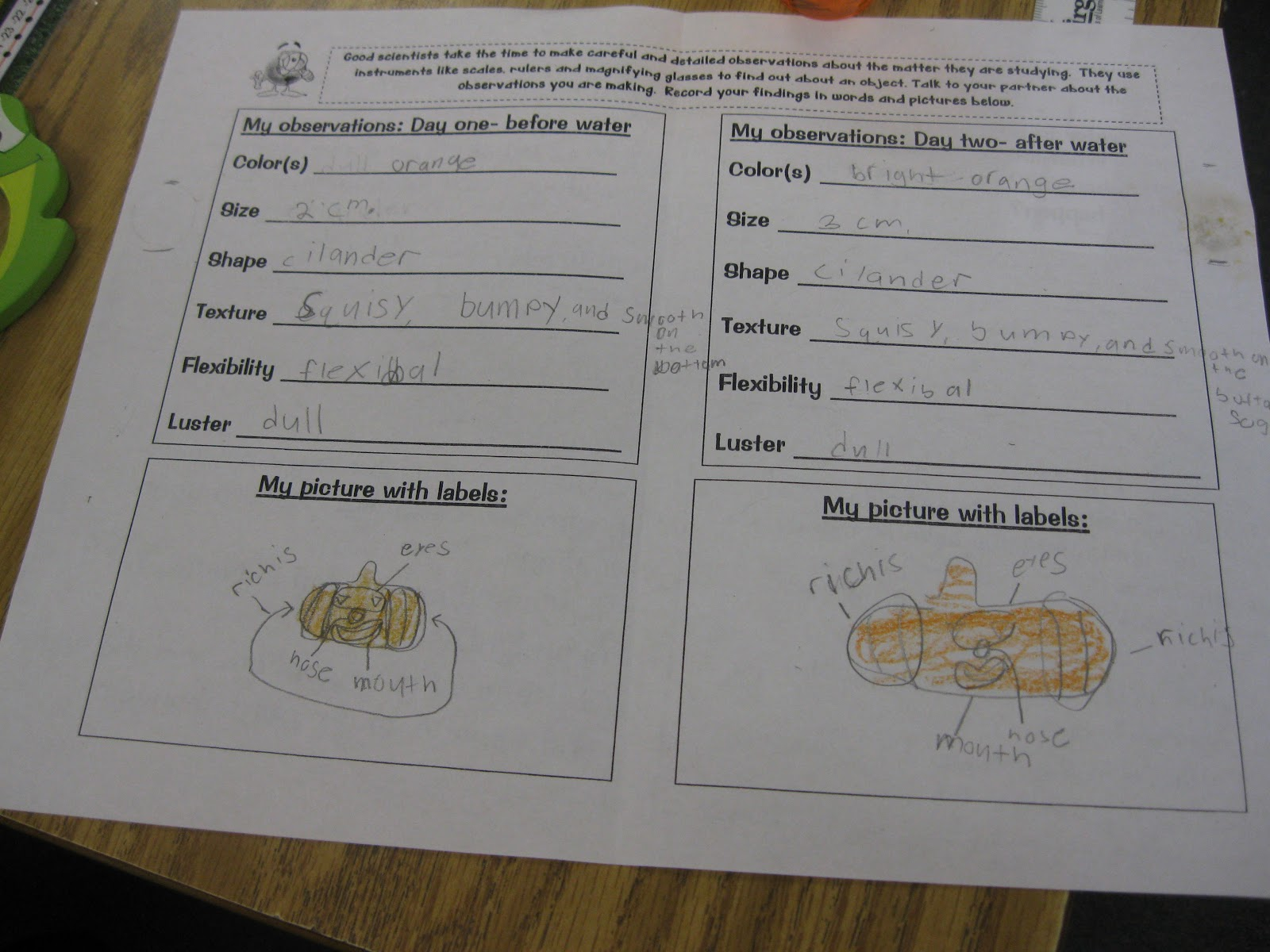 Can Scientist Worksheet