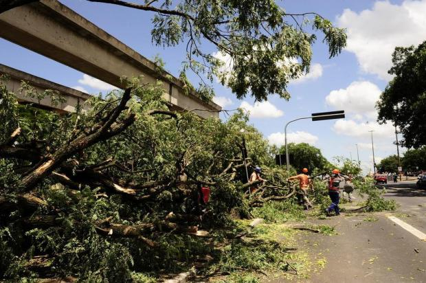 O corte de árvores na Avenida Edvaldo Pereira Paiva (a Beira-Rio), em Porto Alegre, segue suspenso até a realização de uma nova audiência pública que será conduzida na Câmara de Vereadores