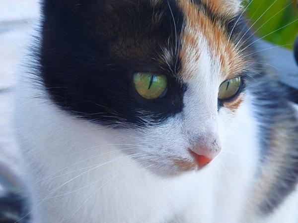 multi-colored cat stunning