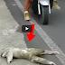 (VIDEO) Subhanallah.. Lihat Apa yang Dilakukan Lelaki ini Kepada Makhluk Ganjil ini Membuatkan Semua Menangis..