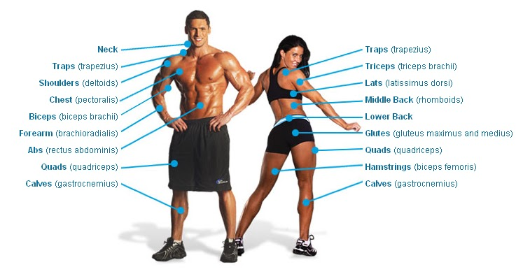Shoulder Muscle Group 66