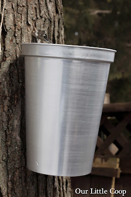 Tap my Trees maple sap spile and bucket