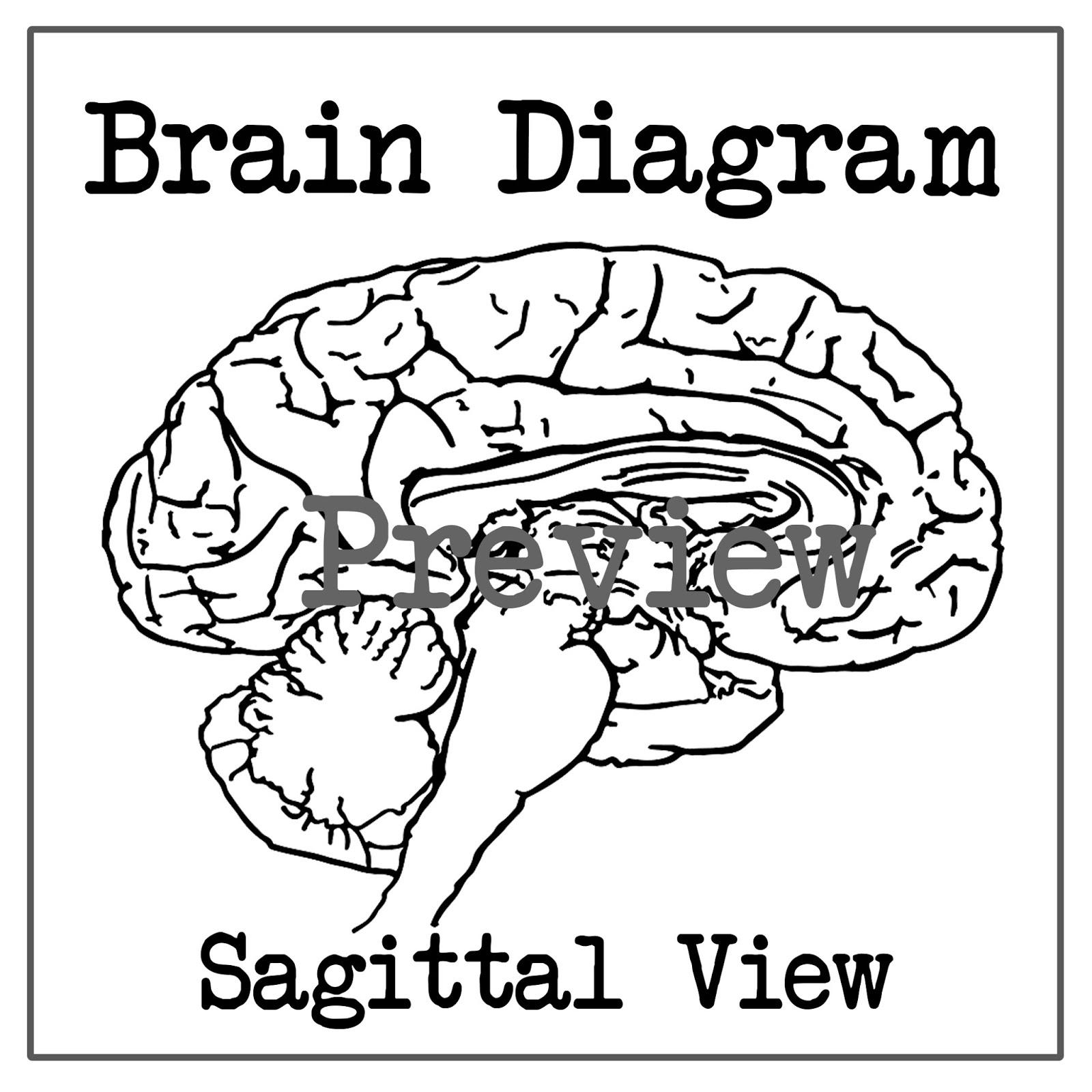 Blank Brain Diagram Sagittal
