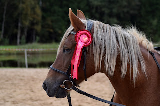 Chestnut horse with flaxen mane wearing a bridle with a red rosette