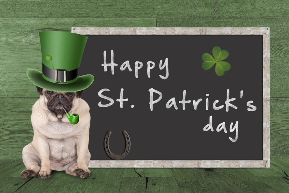 Funny St Patricks Day Pictures Image Free Download