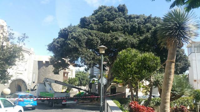 Cae un árbol sobre un coche, Las Palmas de Gran Canaria