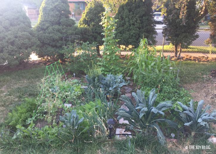 Garden Update: Summer 2018 // www.thejoyblog.net