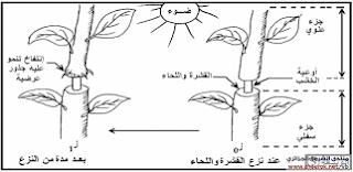 مذكرة حول الخلية العلوم الطبيعية للسنة الاولى متوسط
