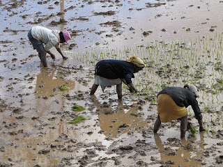 Madagascar's economy is very fragile; the country imports significant amounts of rice from international markets for everyday consumption, around 51 percent.