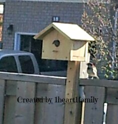 Bird house chickadee
