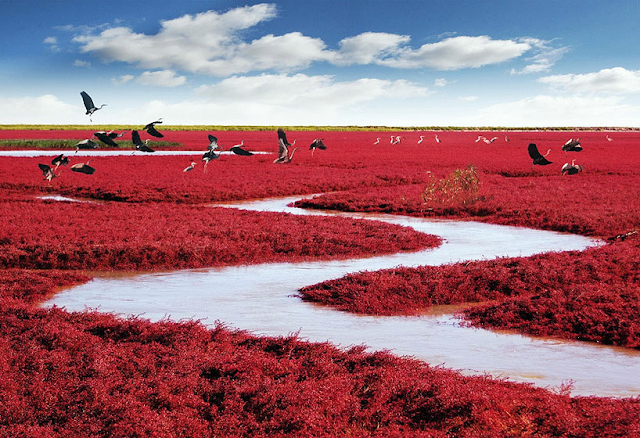 Red Beach, Panjin, China