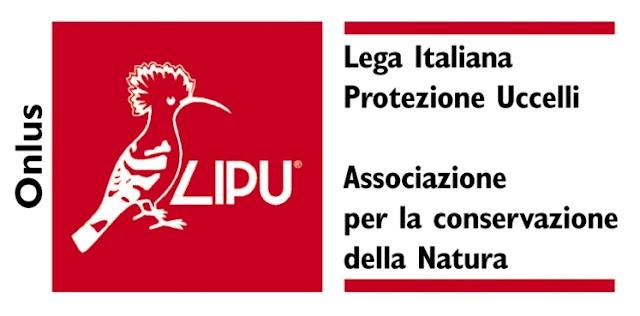 """Scempio di alberi in via Napoli a Foggia. La LIPU presenta esposto e chiede all'Amm.ne Comunale """"Stop all scempio"""""""