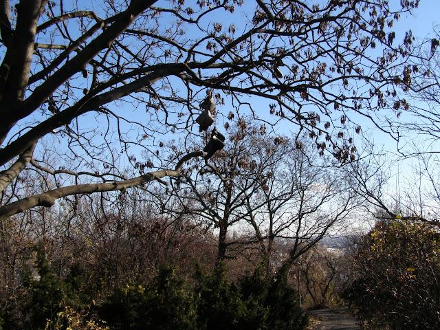 pomi si parcurile de pe dealul catre Cidatela