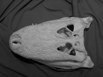 alligator skull