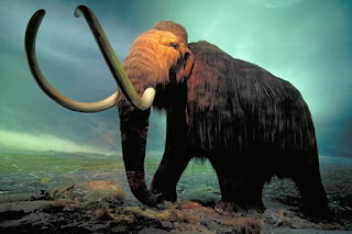 Top 10 The Most Amazing Extinct Animal Species
