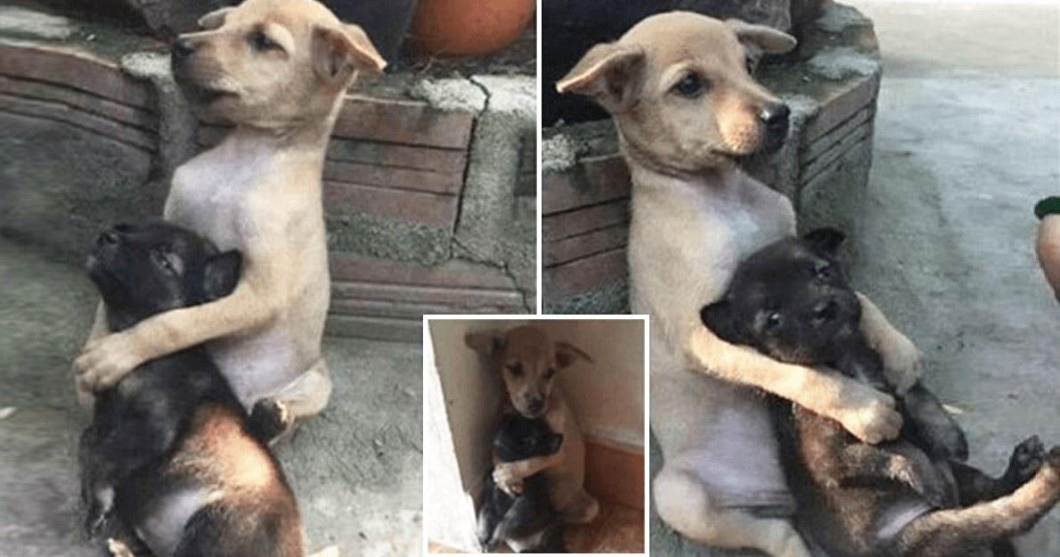 Αδέσποτος σκύλος δεν σταματάει να αγκαλιάζει τον φίλο του όταν τους έσωσαν από τους δρόμους