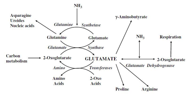 RNA (Pengertian, Struktur, Fungsi, Jenis, Proses Pembentukan)