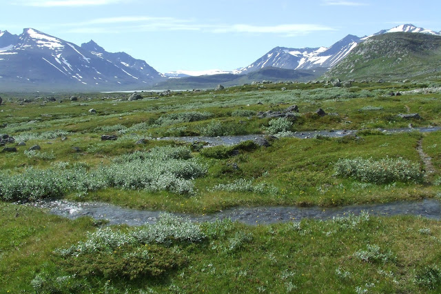 Ecosystems are getting greener in the Arctic