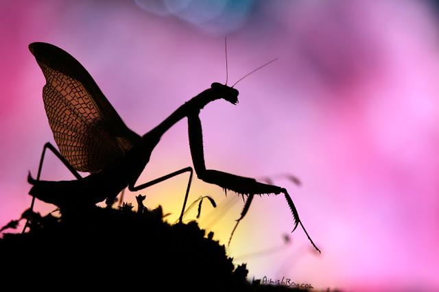 صور بعض الحشرات سبحان الله 6519880845_0d24e156e