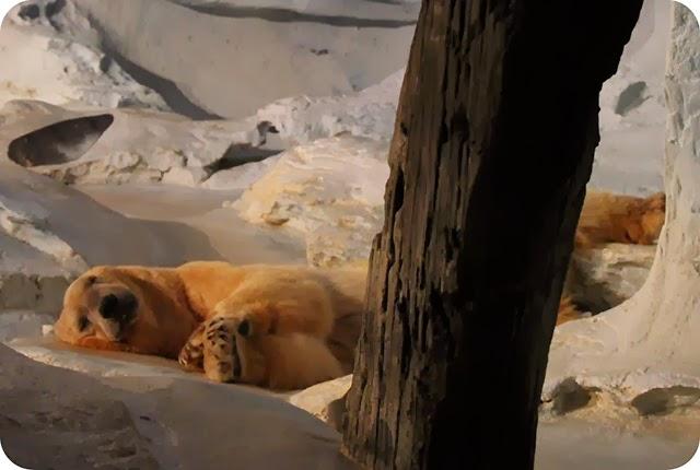 SeaWorld - Orlando : Wild Arctic