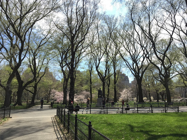Venture & Roam: Central Park in Spring, spring blooms, blooming trees
