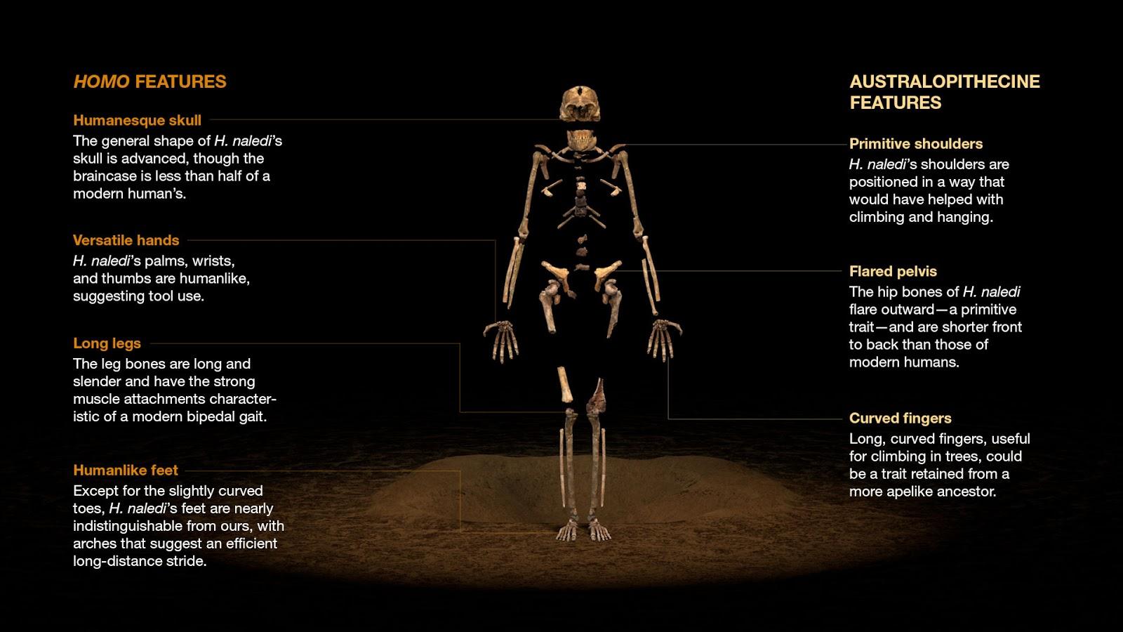 Actualites Scientifiques Prepas Homo Sapiens A Cohabite