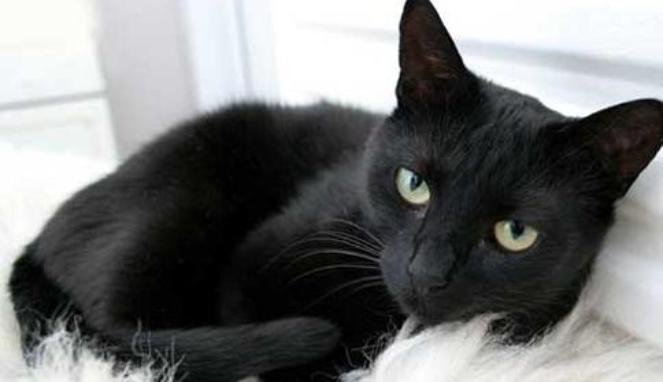 Nama Kucing Hitam Kucingcomel Com