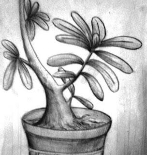 Sketsa Bunga Kamboja