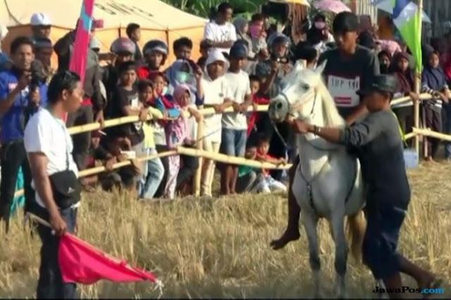 Ikuti Lomba Pacuan Kuda Tradisional, 'Kuda Jokowi' Kalah