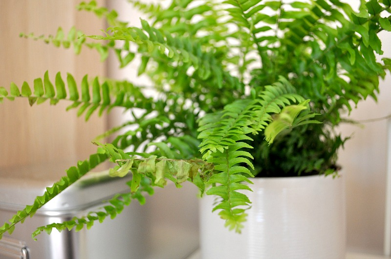 urban jungle blogger green fern