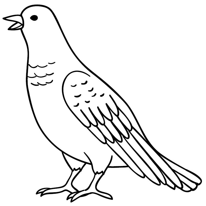 Sketsa Burung Merpati Belajar