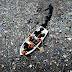 Haverá mais plástico do que peixes nos oceanos em 2050