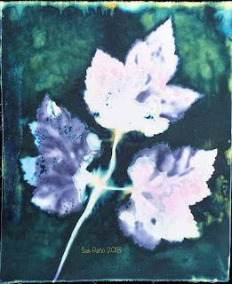 Wet cyanotype_Sue Reno_Image 384