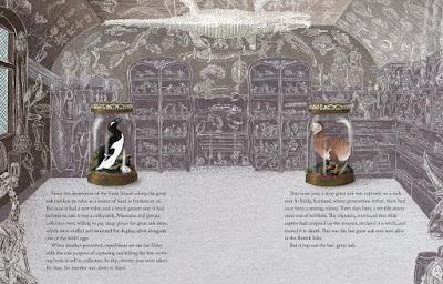 museum illustration Jan Thornhill Tragic Tale of Great Auk