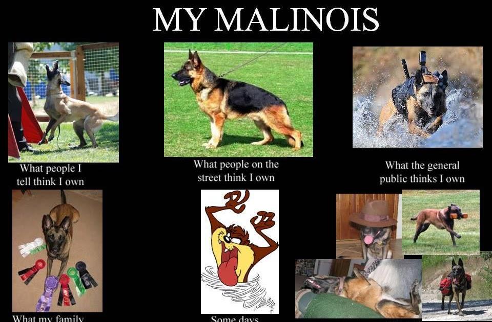 3 Dog Days My First Meme